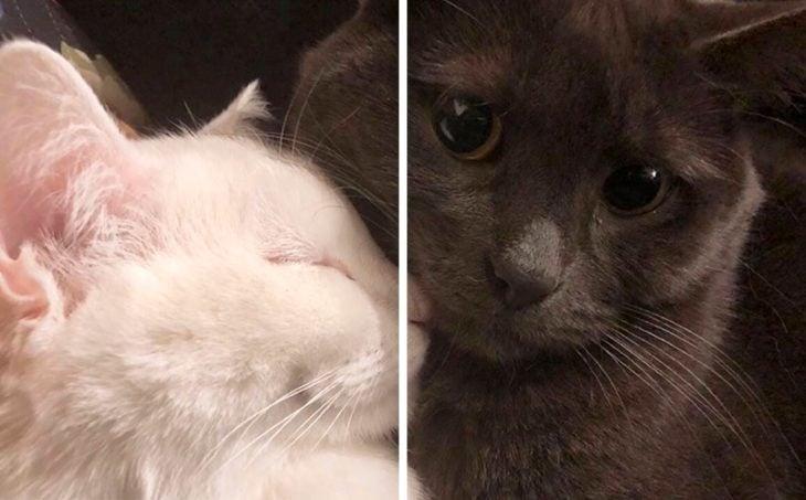 Fondo de pantalla en pareja de Gatitos