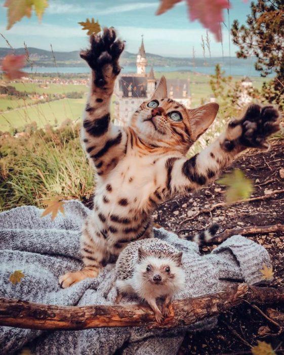 Herbee el erizo y Audree la gatita de bengala jugando con hojas secas