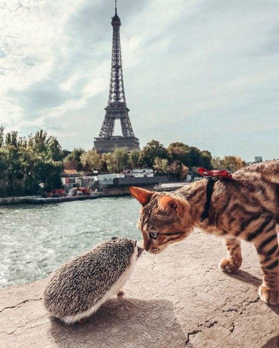 Herbee el erizo y Audree la gatita de bengala con la torre Eifeel de fondo