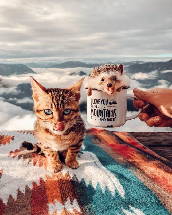 Herbee el erizo y Audree la gatita de bengala en la montaña