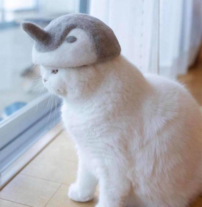 Gato con sombrero hecho de su propio pelaje