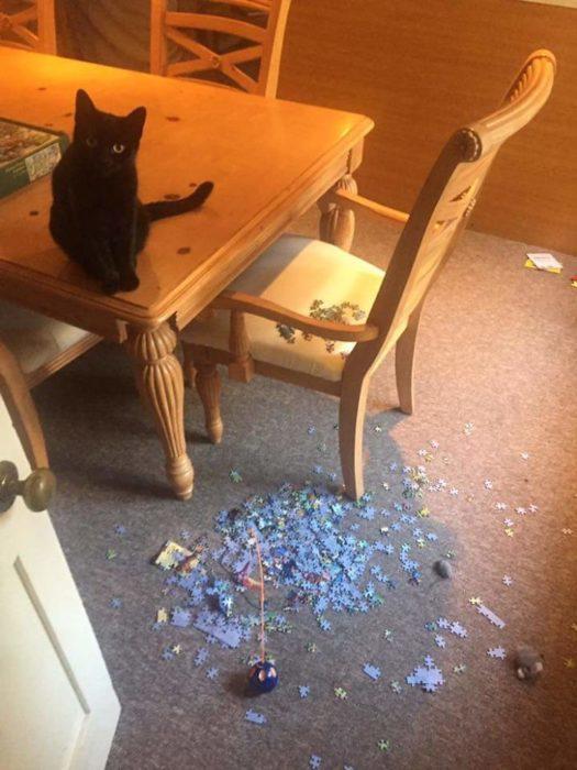 Fotos prueban que es imposible armar rompecabezas con gatos