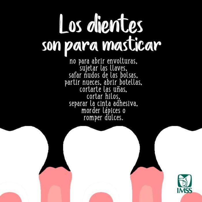 Infografía sobre la función de los dientes