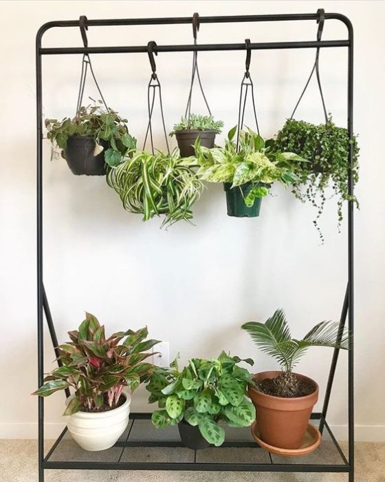Jardín vertical para inteior