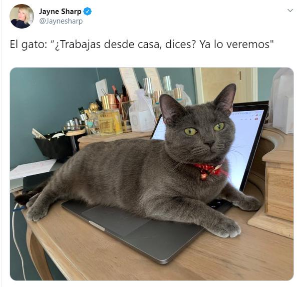 Personas comentando en twitter como sus mascotas no los dejan trabajar