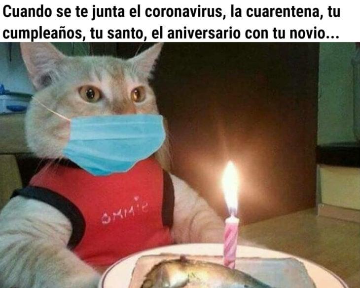 Memes de coronavirus para quienes cumplen años en cuarentena; gato con pastel de sardina