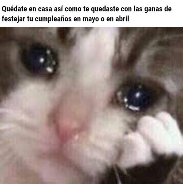Memes de coronavirus para quienes cumplen años en cuarentena; gato triste