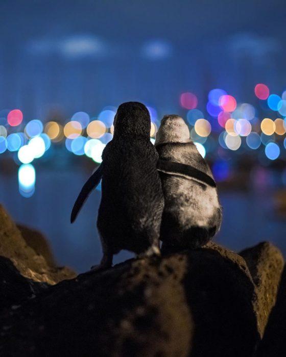 Pareja de pingüinos abrazados a la orilla del mar mirando el paisaje