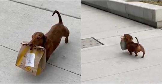 Perrito que fue captado caminando por las calles mientras sostiene unas bolsas de comida