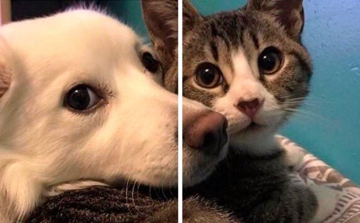 Fondo de pantalla en pareja de Perro y gato