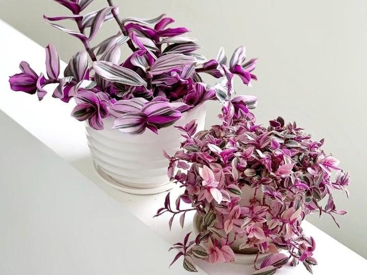 Plantas de color morado que pueden decorar tu casa