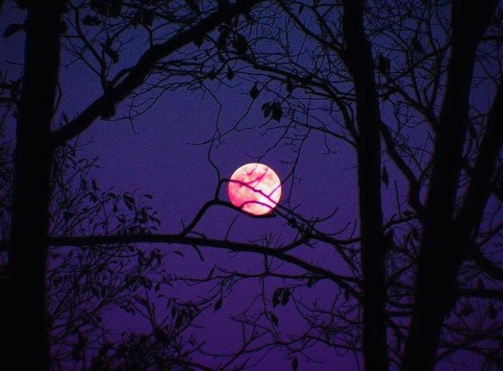 Luna rosa de abril podrás verla hoy
