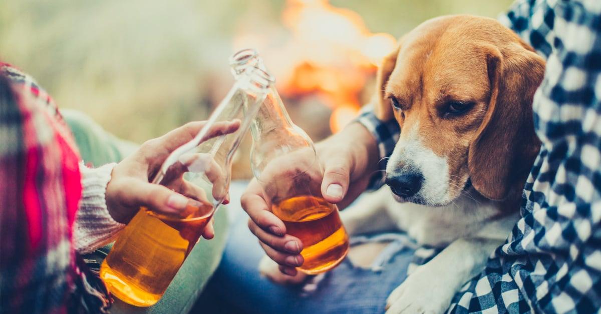 Para ayudar a refugio de animales, Busch regala cerveza a quien adopte a una mascota