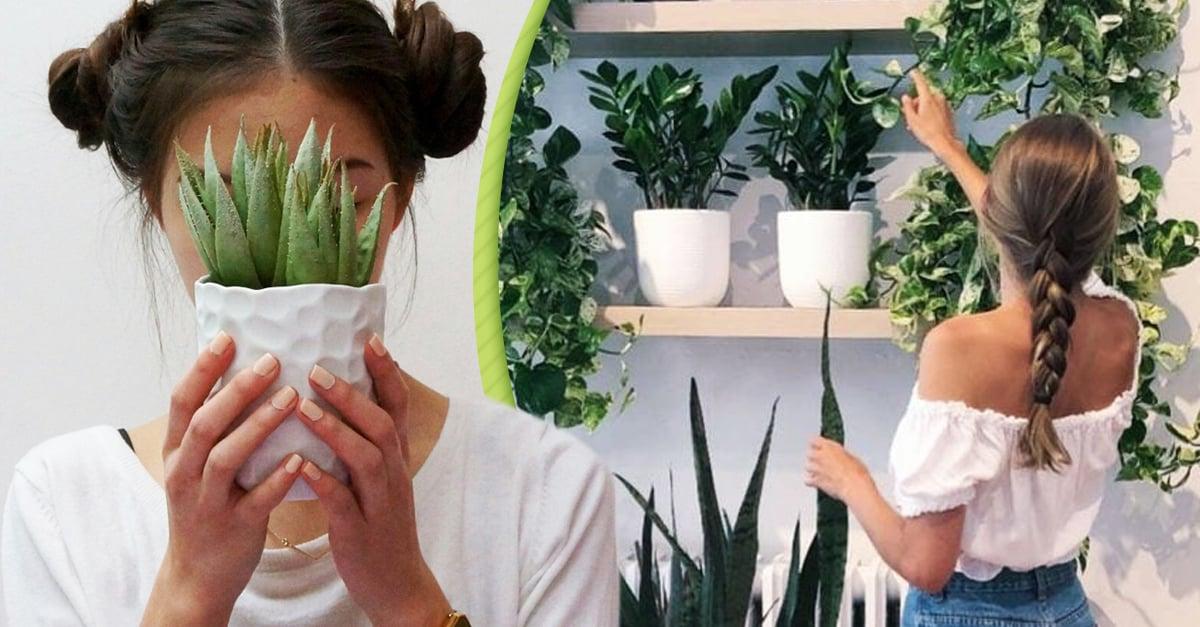 Cuidar de tus plantitas es la mejor terapia contra el encierro