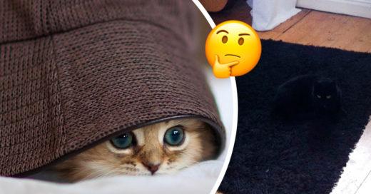 ¡No te aburras! Intenta encontrar al gato escondido en cada imagen