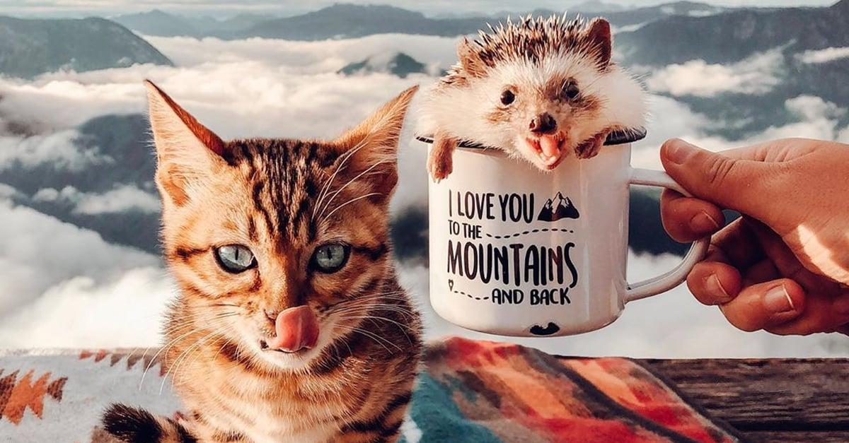 Erizo y gatita viajan por el mundo y sus fotos son puro amor