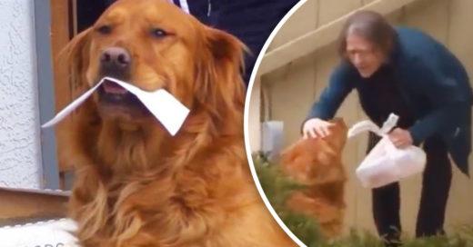Él es Sunny, el perrito que lleva comida a su vecina en cuarentena