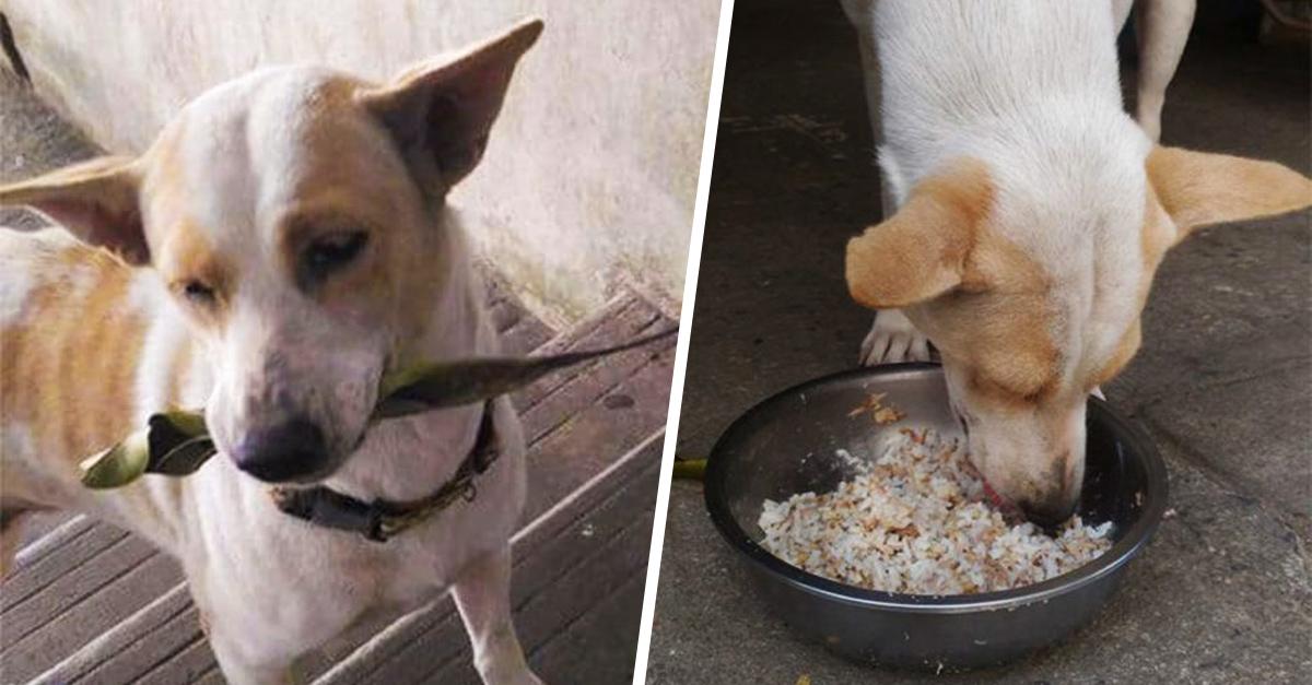 Adorable perrito lleva regalos a la mujer que le da de comer