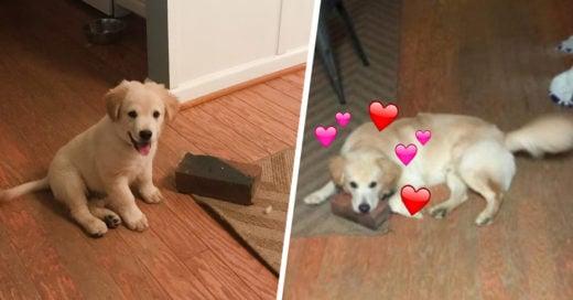 Un cachorrito adoptado tiene un mejor amigo muy peculiar… ¡Un ladrillo!