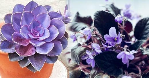 Plantas moradas que le darán color y vida a cualquier habitación de tu casa
