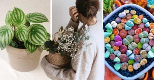 15 Plantas que harán de tu casa un lugar más acogedor y fresco