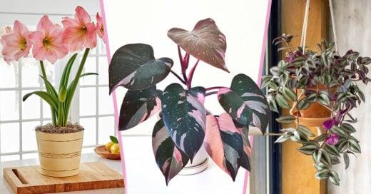 15 Plantas color rosado para llenar de dulzura tu hogar