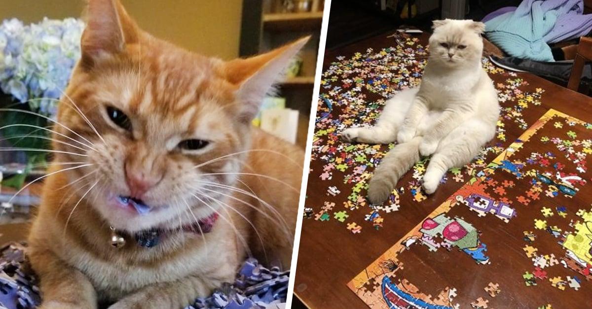 Armar un rompecabezas con un gato es imposible y estas foto lo demuestran