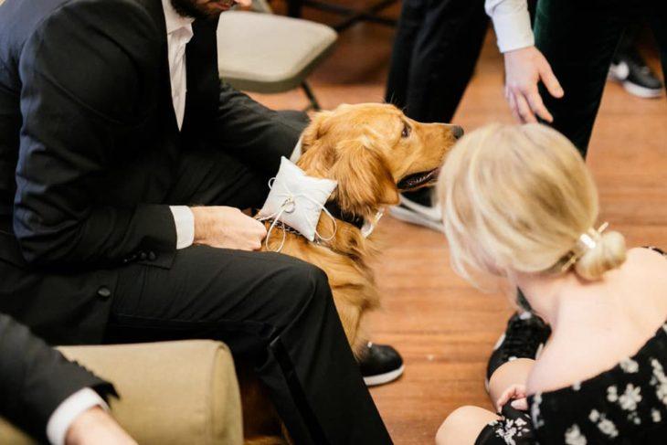 Perro labrador retriever con un par de argollas de matrimonio atadas al cuello
