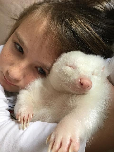 Niño abraza a mofeta albina