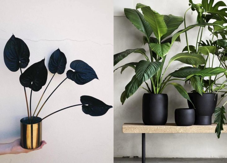 Decoración negra para tu casa; plantas y macetas