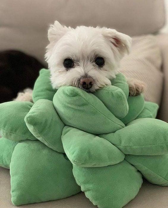 Cojín de suculenta con un perrito acostado