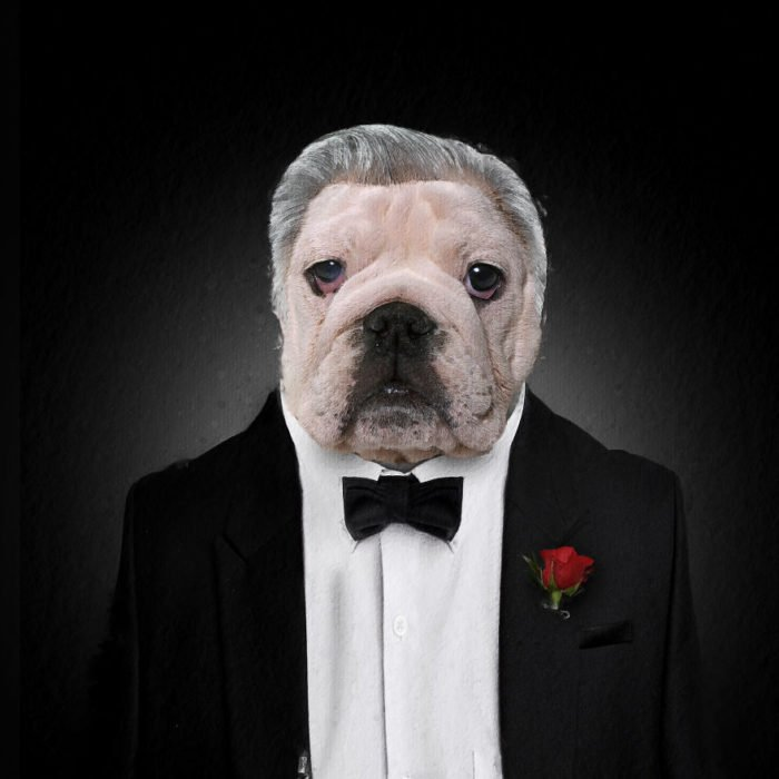 Perro bull dog vestido como El padrino