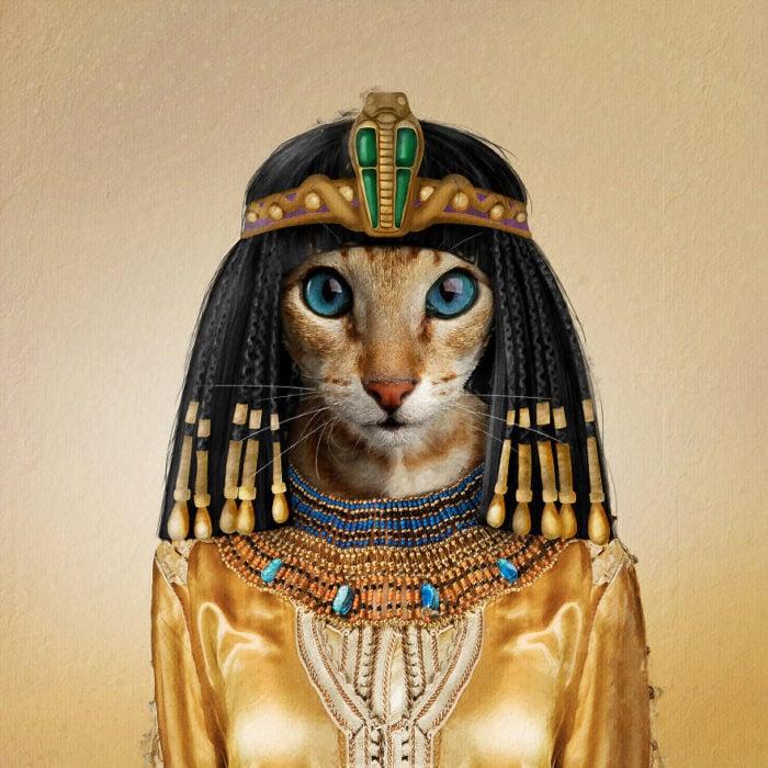 Gatita mestiza vestida como Cleopatra