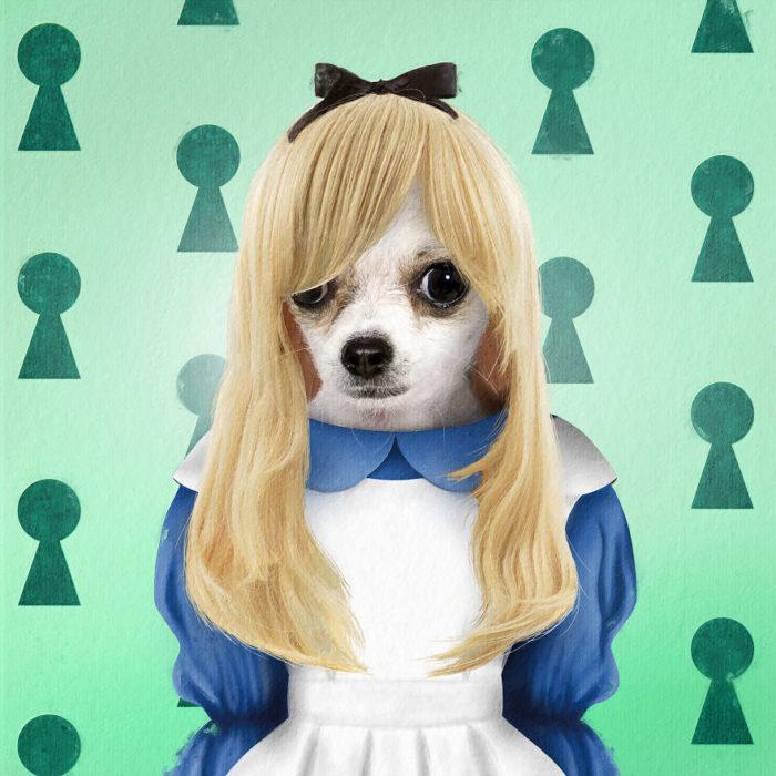 Perro chihuahua disfrazado como Alicia en el país de las maravillas