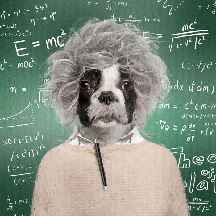 Perrito vestido como Albert Einstein