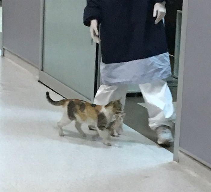 Gata lleva a su cría al hospital para que lo atiendan
