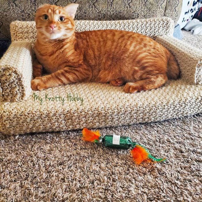 Garo anaranjado acostado en mini sillón beige