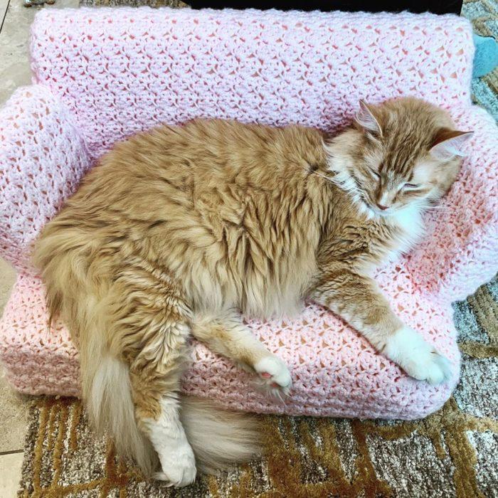 Gato pelo largo anaranjado acostado en sillón rosa