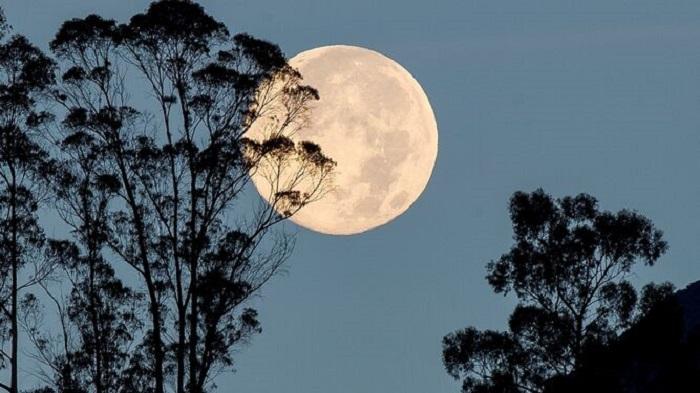 Luna llena y árboles
