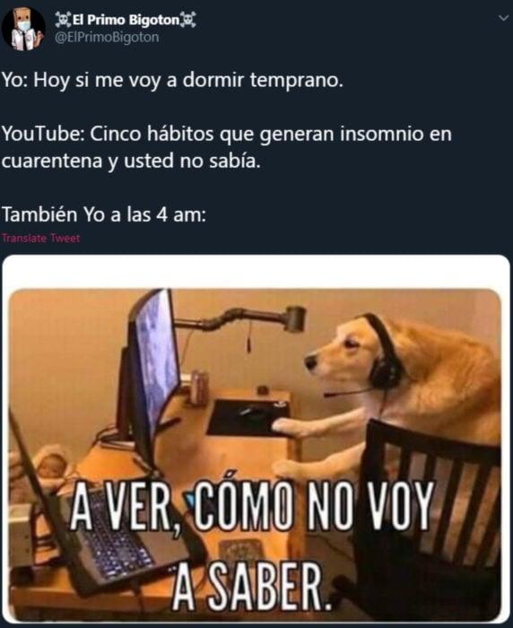 Memes de insomnio en la cuarentena; perro en la computadora