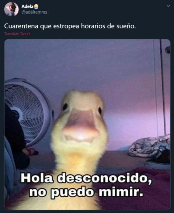 Memes de insomnio en la cuarentena; pato en el celular