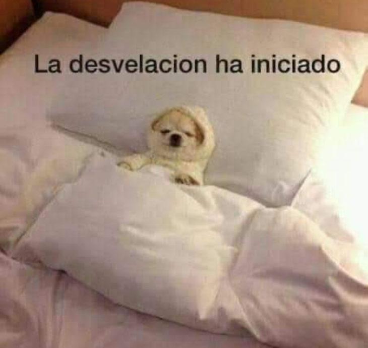 Memes de insomnio en la cuarentena; Perro intentando dormir