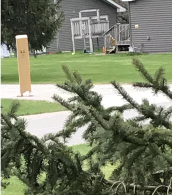 Niño usando una caja larga en la cabeza mientras camina por el jardín