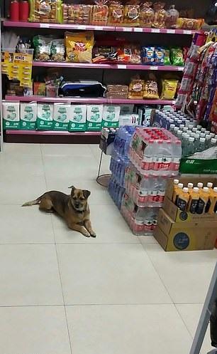 Xiao Bao esperando en una tienda