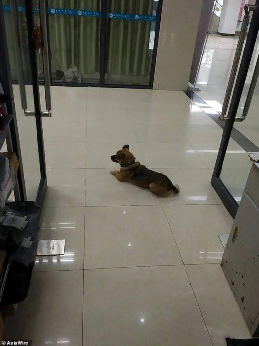 Xiao Bao perrito espera a su dueño