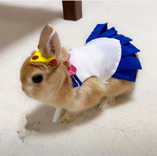 Conejito vestido de sailor moon