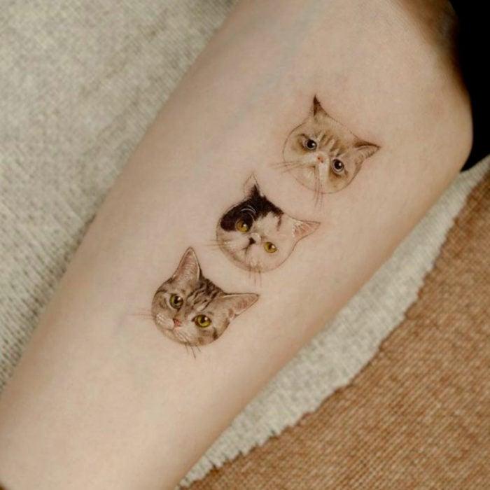 Tatuajes temporales; retratos de gatos realistas en el brazo
