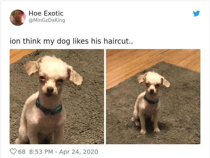Dueños cortaron mal el pelo de sus perros durante la cuarentena