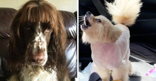 13 Personas cortaron el pelo a sus perros y fallaron graciosamente