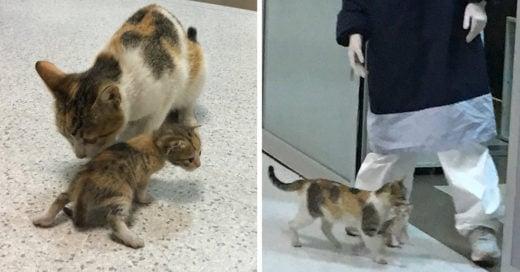 Gata callejera lleva a su bebé a sala de emergencias para que lo curen